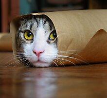 burrito cat meme by Katheridiot