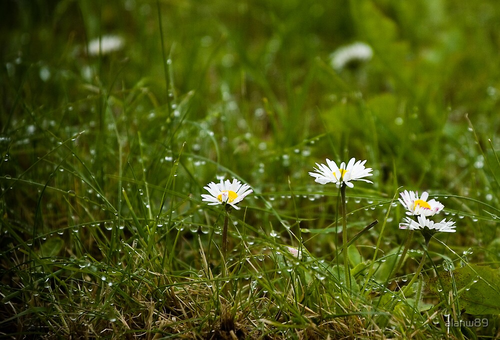 daisies by alanw89