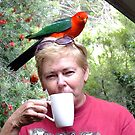 Parrot coffee, Killarney, Qld, Australia by Sandra  Sengstock-Miller