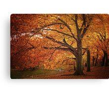 Oak Trees  Canvas Print
