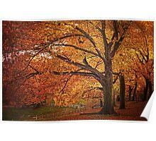 Oak Trees  Poster
