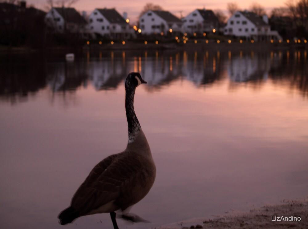 Canada Goose at Sunset  by LizAndino
