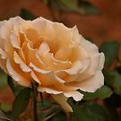 'A TRIBUTE TO THE ROSE' by Magriet Meintjes