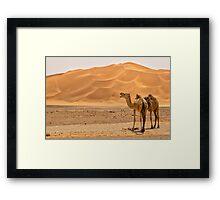 Wild Camels Framed Print