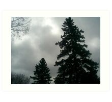 spruce tree with fog Art Print