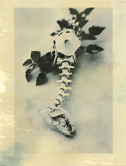 Datura Flower and Coyote Bones by Elena Ray