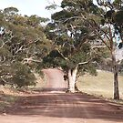 Road to Hancock's lookout South Australia  by Virginia  McGowan