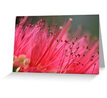 Plush Pink Greeting Card
