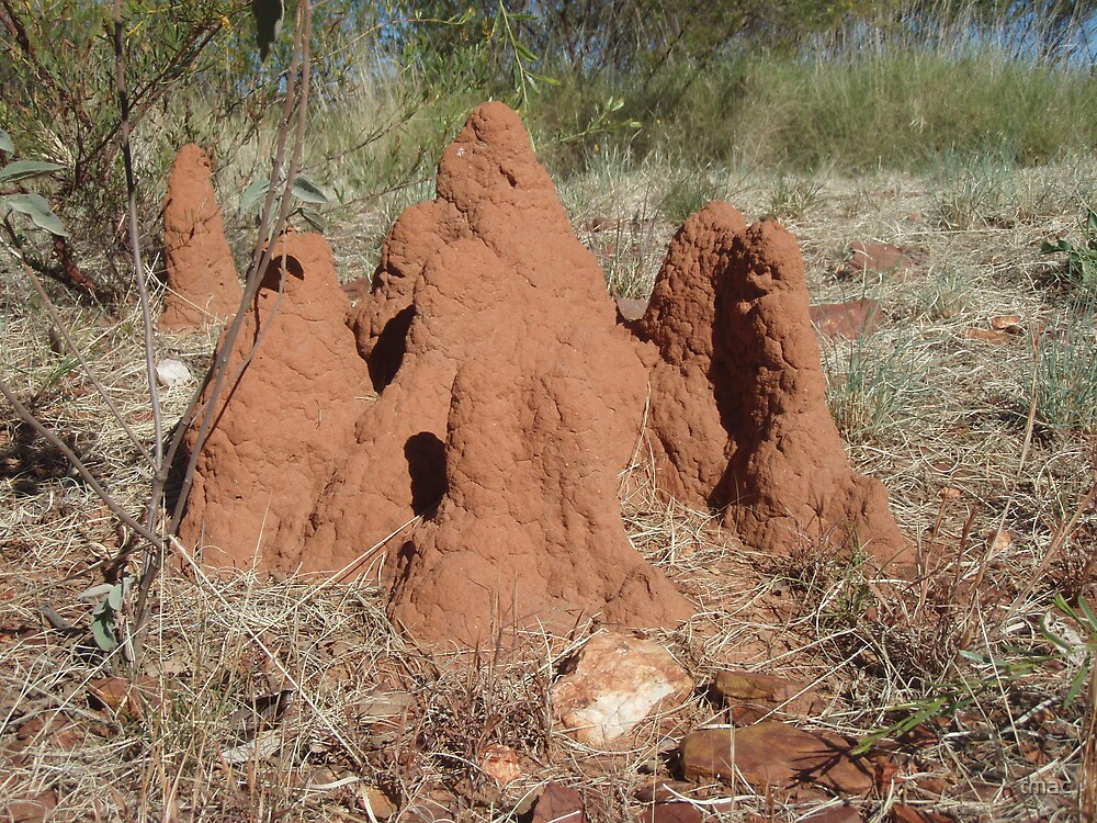 Tennant Creek, NT, Australia - Termite Castle 1 by tmac