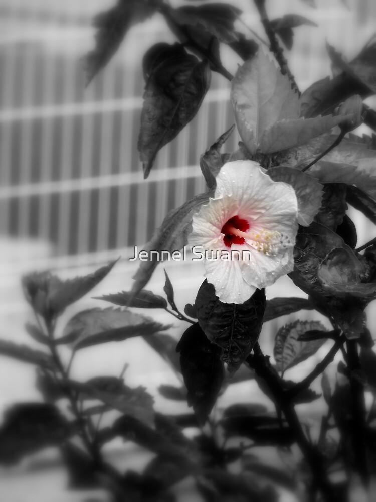 Crimson Blush by Jennel Swann