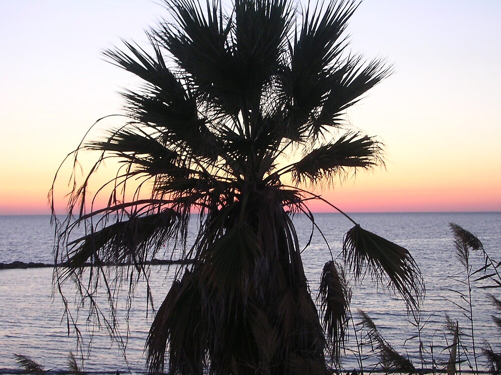 Palm sunset by Debby Allen