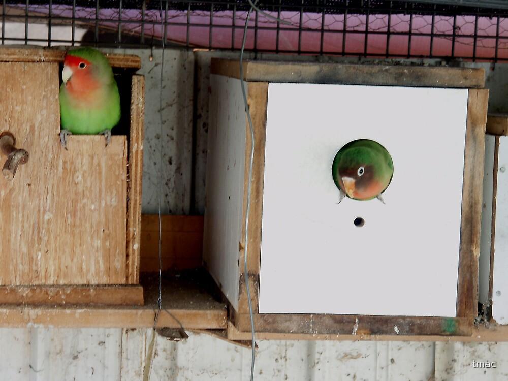 Tennant Creek, NT, Australia - 2 Birds in Boxes by tmac