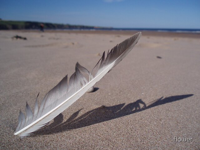 feather by flower