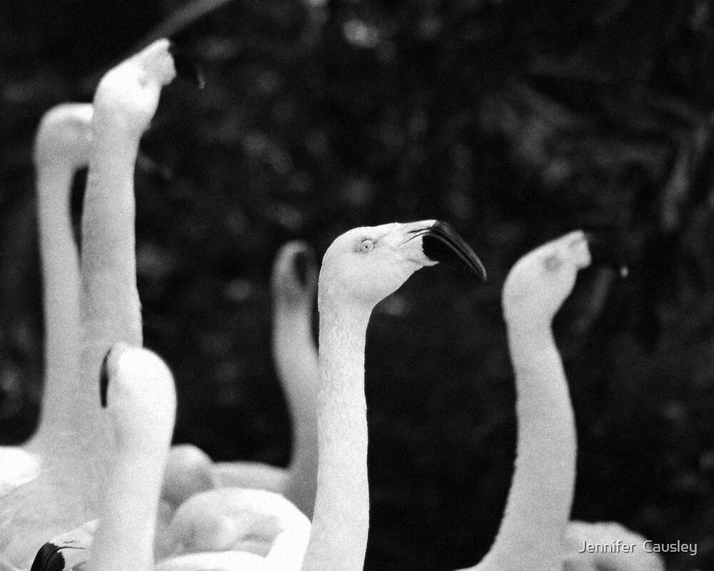 Flamingo Necks by Jennifer  Causley