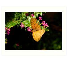 Light brown coloured butterfly Art Print