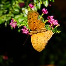 Light brown coloured butterfly by sprintist