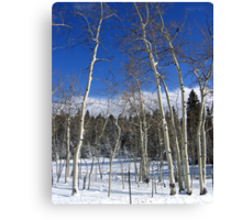 Dusted Aspens Canvas Print