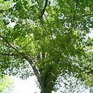 very bushy tree by oilersfan11