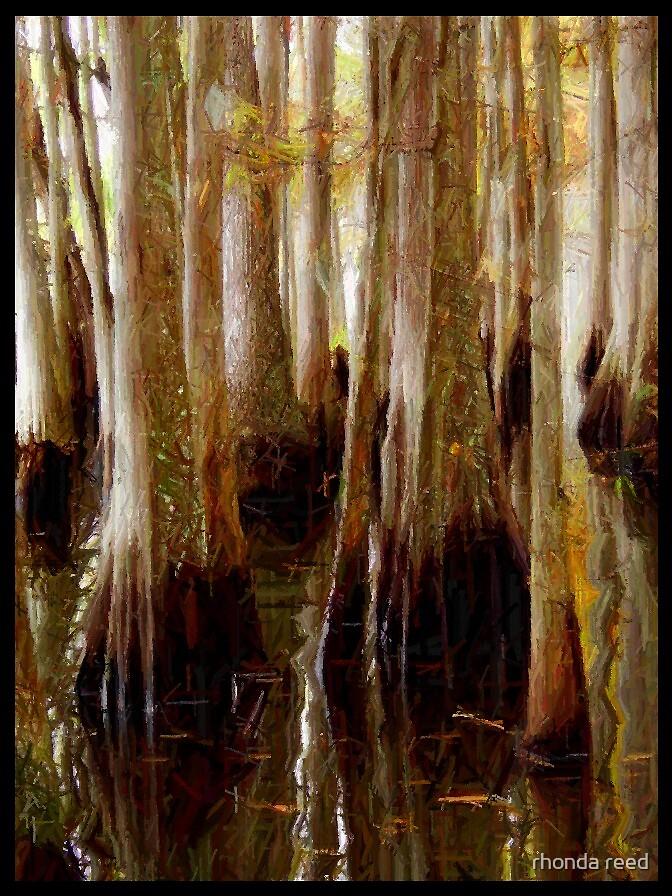 Cypress trees in water by rhonda reed