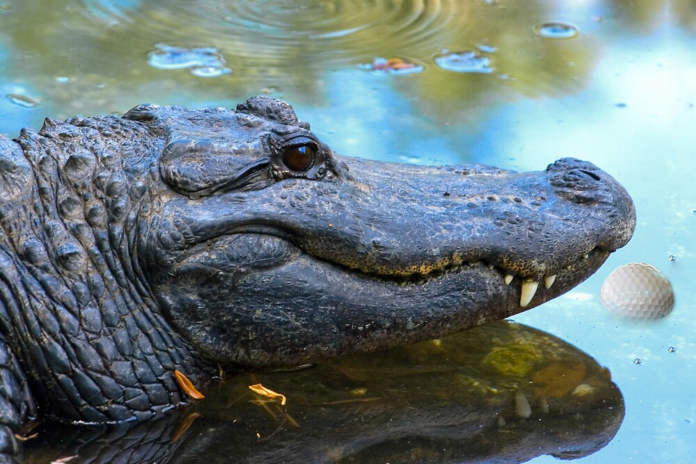 Smiling Alligator by Delores Knowles
