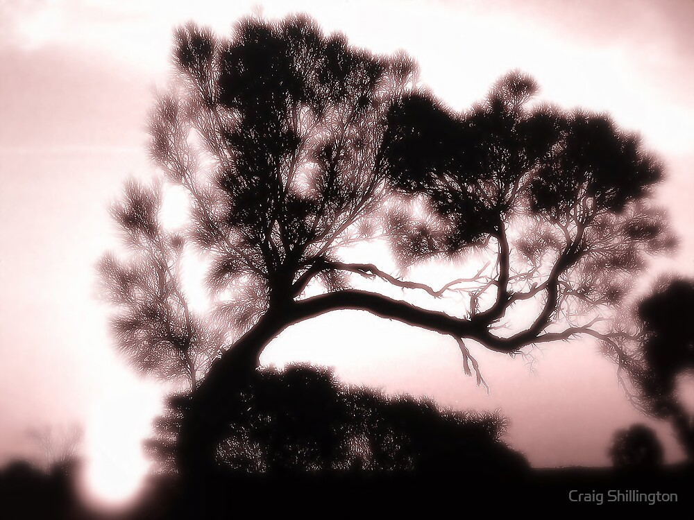 Bonsepia by Craig Shillington