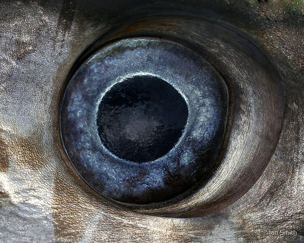 Swordfish eye by Ian Smith