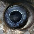 Swordfish eye by Ian Smith