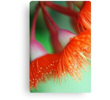 Blossom Of The Gum Canvas Print