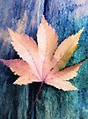 Maple Abstract by SexyEyes69
