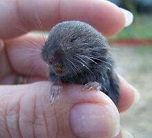 rescued mole by tomcat2170