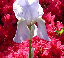 Beautiful Bloom by Kerri McMahon