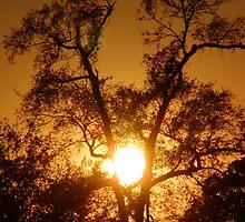 Ranch Sunset by Kerri McMahon