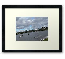 Seagulls on the Manning River Taree. Framed Print
