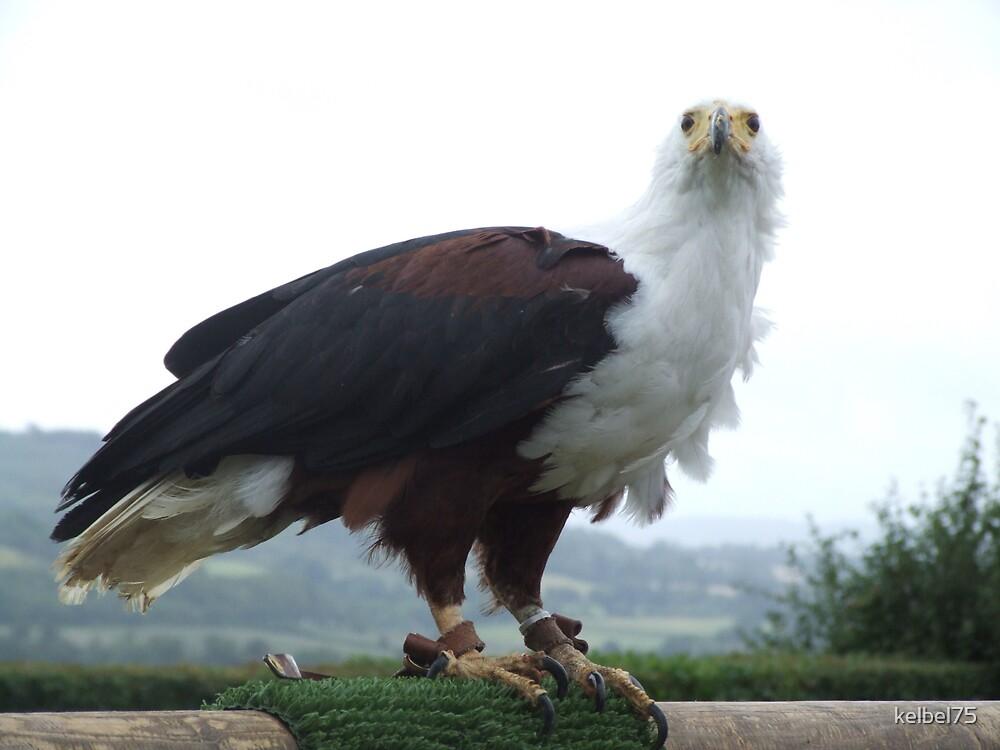 Eagle#2 by kelbel75