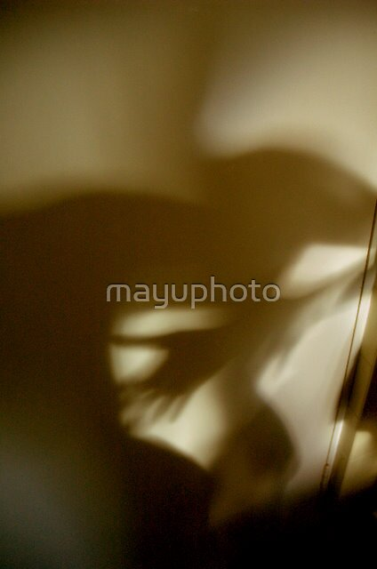 Shadow play by mayuphoto