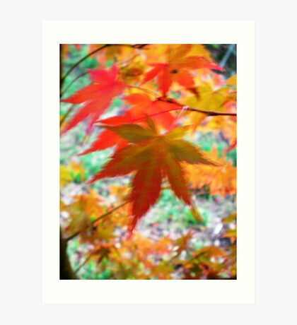 Blurred Maple Art Print