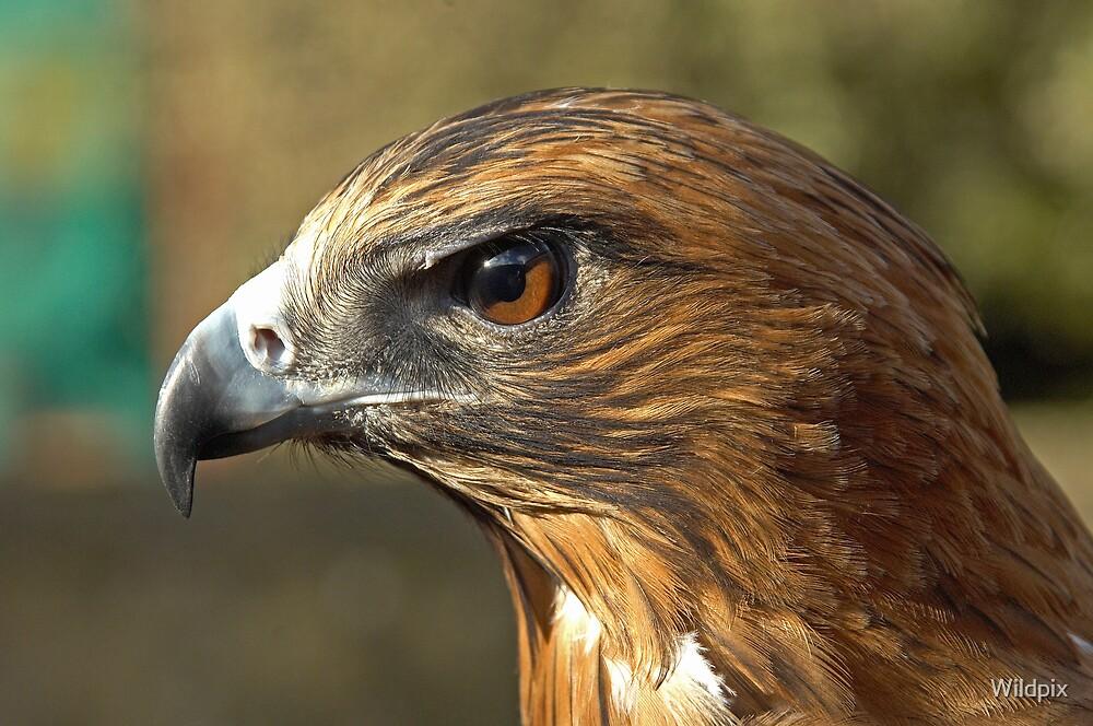 Eagle Eye by Wildpix