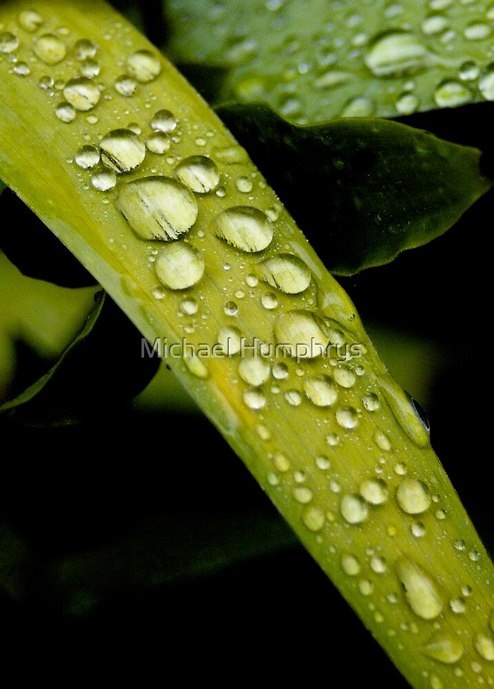 Fresh Rain by Michael Humphrys