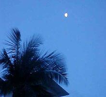 Waikiki Palm at Dusk by Sheryl Sutter