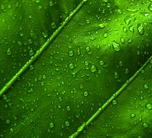 Green by dhonjason