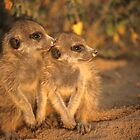 Meerkat pups by Adam Seward