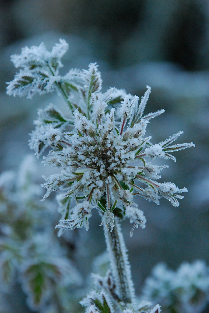 Frost 3 by Hazel Wallace