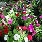 very nice flowers by oilersfan11