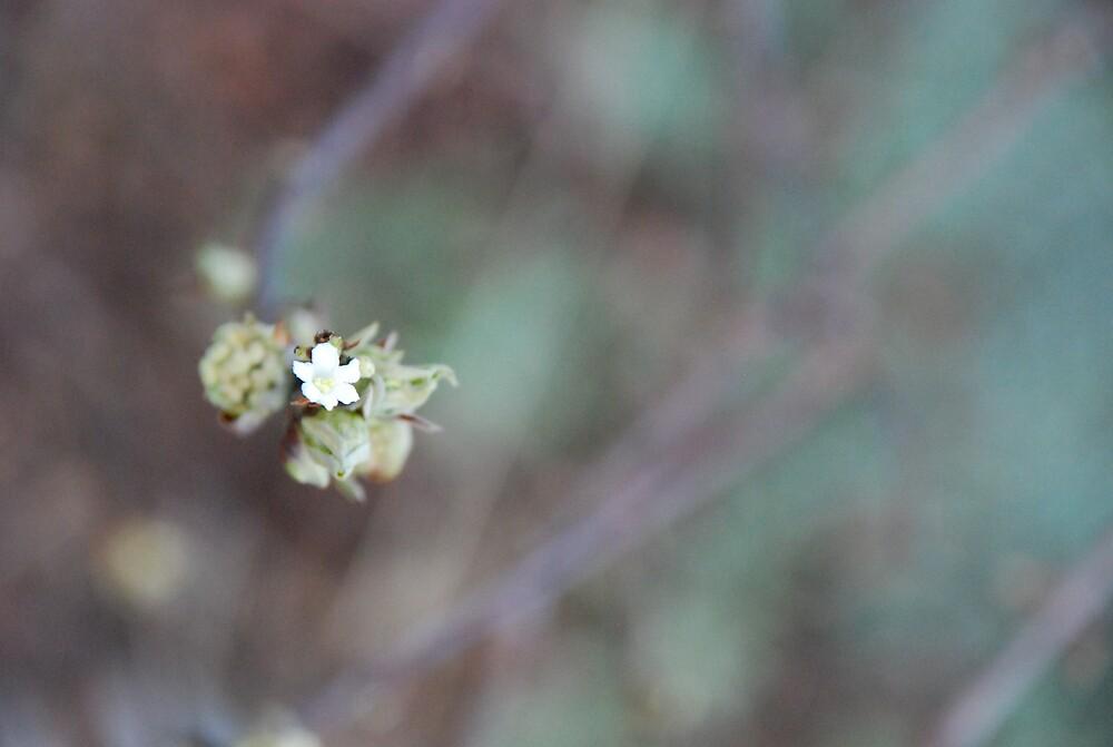 Garden 1 by Hazel Wallace