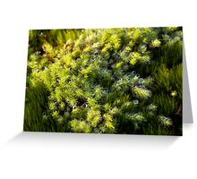 Miniature Forest #1 Greeting Card