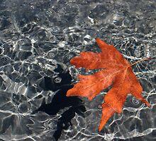 Leaf by Cathie Tranent