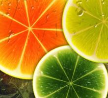 Citrus slices design Sticker