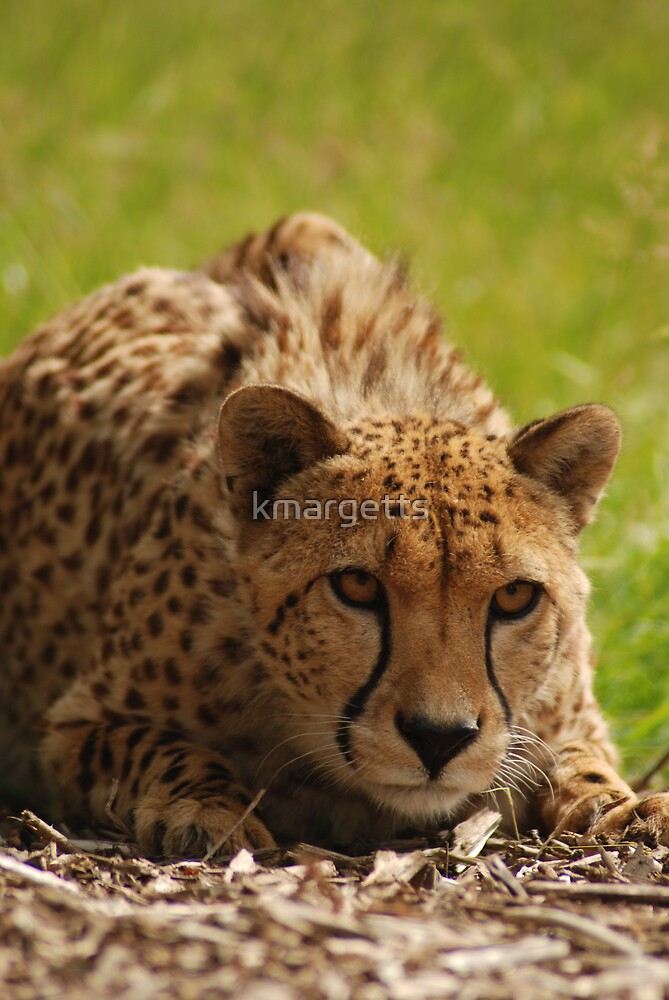Pounce by kmargetts