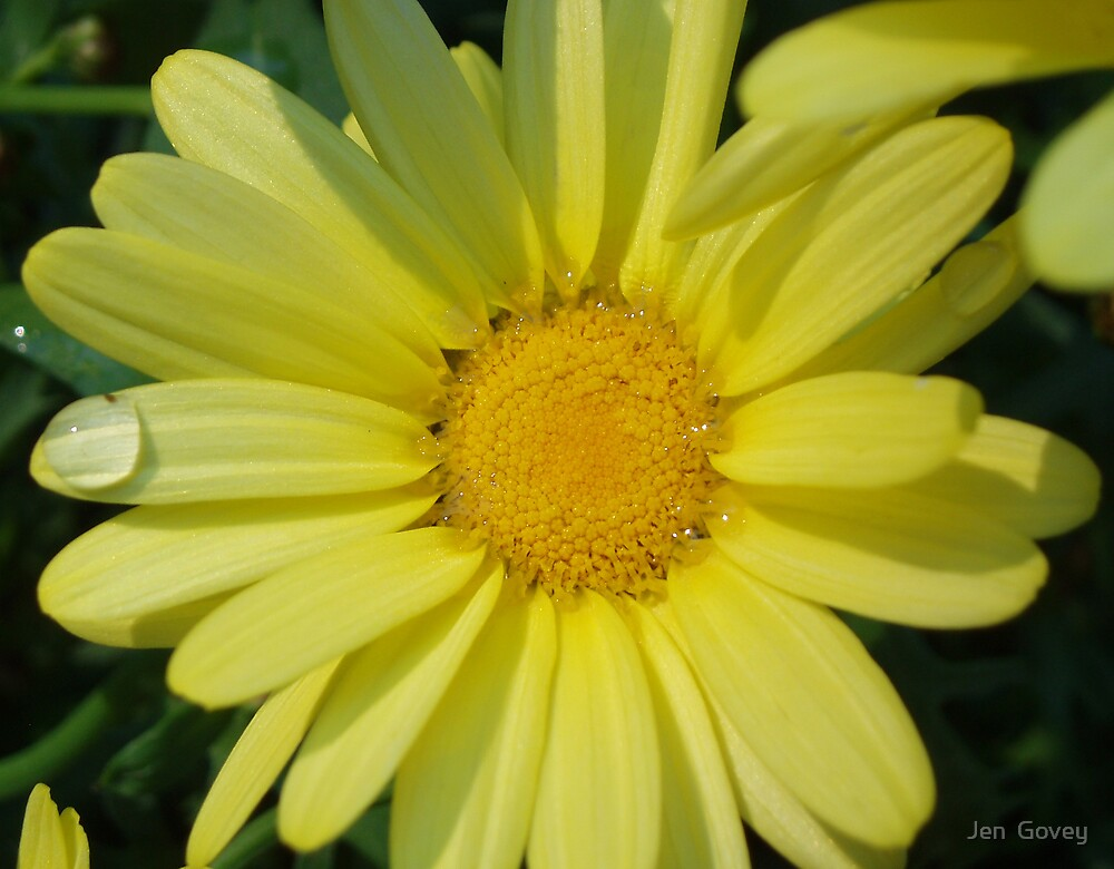 Sunshine Flower by Jen  Govey