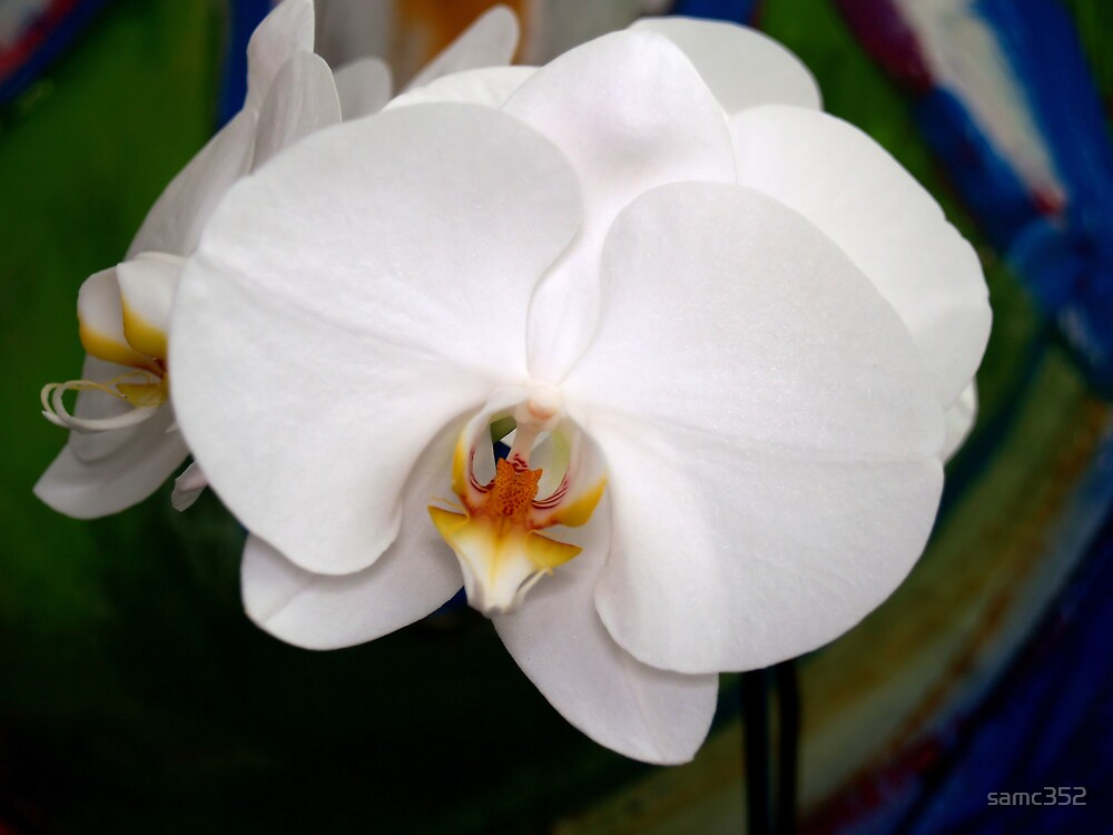 white orchid by samc352